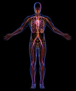 A hologram of the inside of a human body.